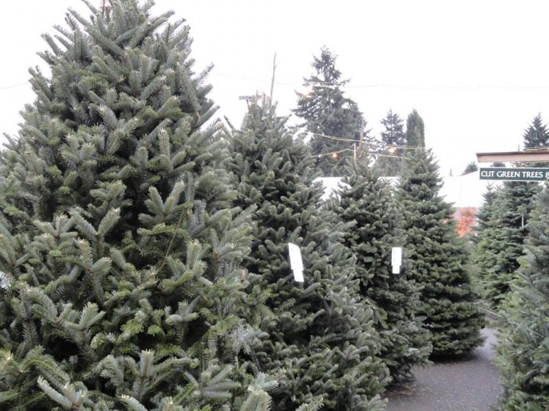 Christmas Shop Kirkland Wa