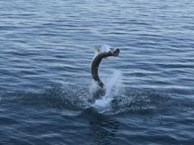 Anna Maria Island Fishing Report | Bradenton, FL Patch