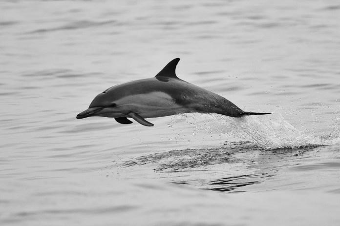 ถ่ายภาพปลาโลมาด้วยความเร็วชัตเตอร์ 1/1600 วินาที , Source : Photographylife