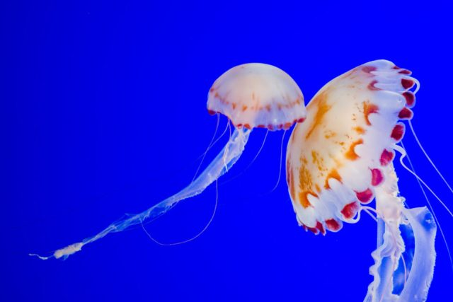 Underwater Photography Example