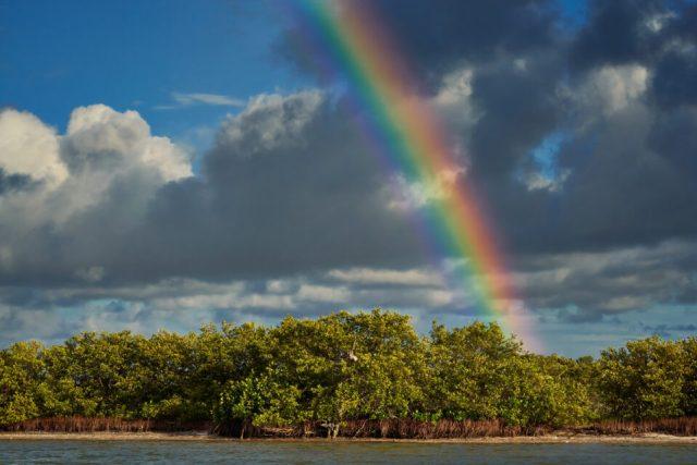 7. Rainbow over Mangroves, Mexico