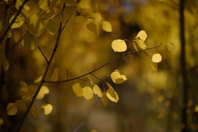 Close-Up Bokeh from Nikon 58mm f1.2 Noct