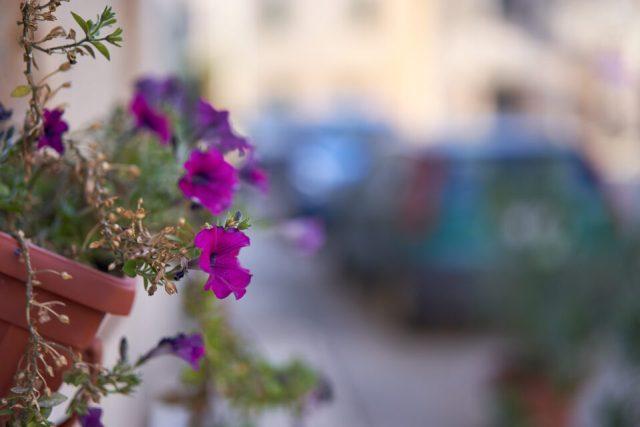 17. Flower on Street