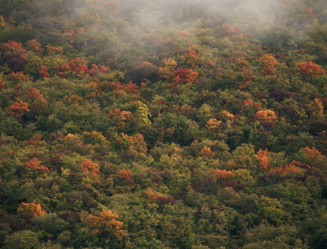 21. Dalamtian Forest during Fall