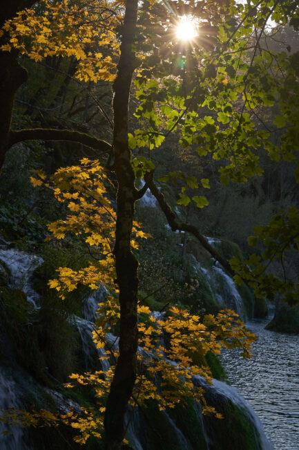 26. Sun Through Fall Leaves