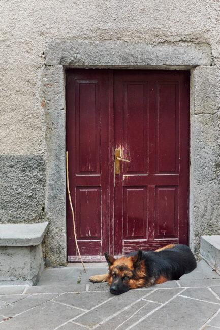5. Dog and Red Door