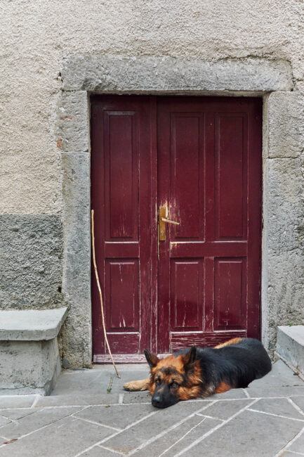 5. Dog and Red Door