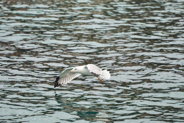 6. Seagull