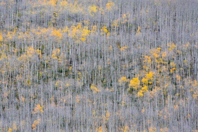 Nikon Z7 Landscape Telephoto