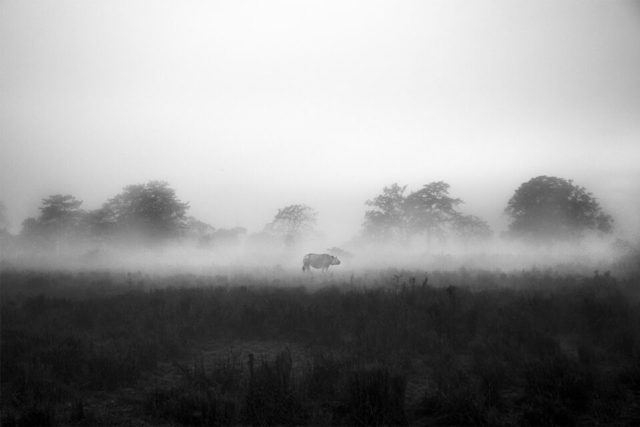 8.-Lone-Rhino-Chatterjee_India