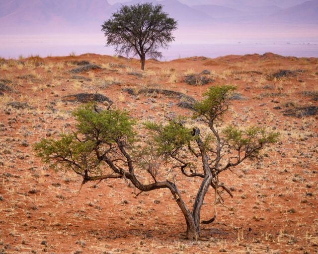 A forest in Namibia