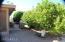 Mature citrus trees