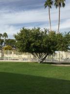 Fruit trees, pool deck, bath house.