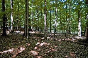 Beautiful double wooded home site only a half mile from Marina.