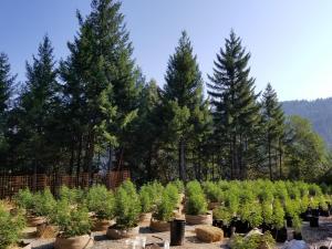 000 Coon Creek Road, Willow Creek, CA 95573