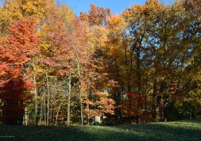 6445 Pine Hollow Drive, East Lansing, MI 48823, ,Vacant Land,For Sale,Pine Hollow,231061