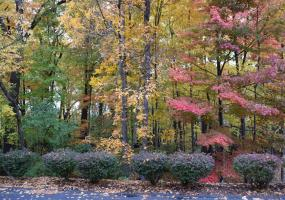 6445 Pine Hollow Drive, East Lansing, MI 48823, ,Vacant Land,For Sale,Pine Hollow,235098