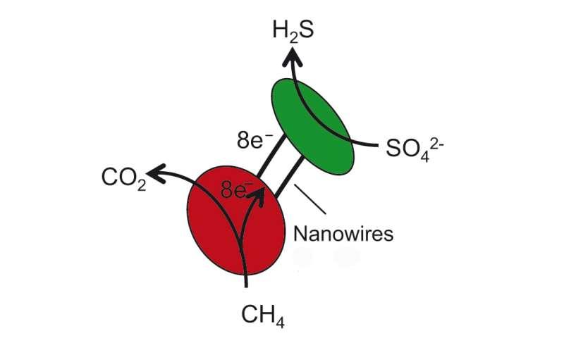 Nano power grids between bacteria