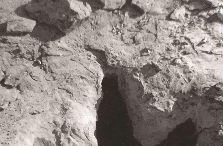 University of Alberta researcher tracks tyrannosaur's trail