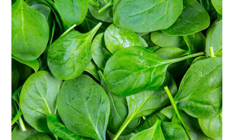 Researchers discover a cell in spinach that uses sunlight to produce electricity and hydrogen