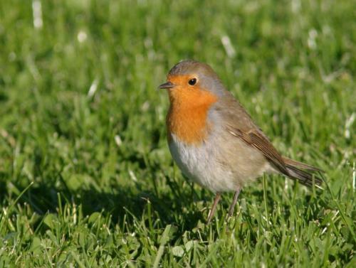 Las ondas de radio afectan a las aves migratorias, los informes de estudios