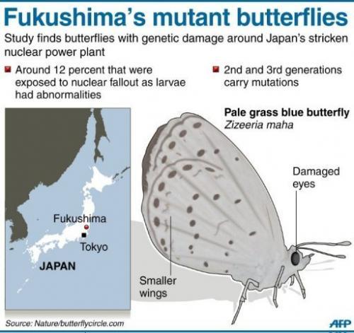 Fukushima's mutant butterflies