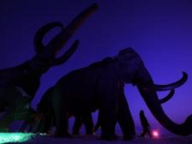 Arginare gli scienziati cellulari stanno impostando i propri occhi sul estinti mammut lanoso