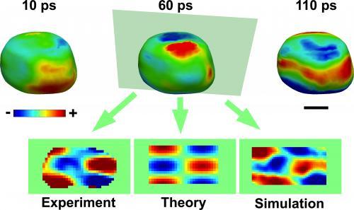 Gold nanocrystal vibration captured on billion-frames-per-second film