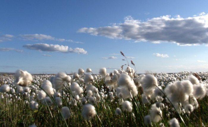 Algodón orgánico, trazabilidad textil, Organic Cotton Traceability Pilot, C&A, C&A Foundation, Bext360, Fashion for Good, sostenible