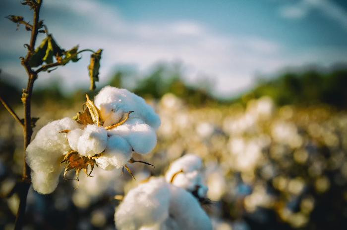 Textile Exchange, algodón sostenible, 2025 Challenge