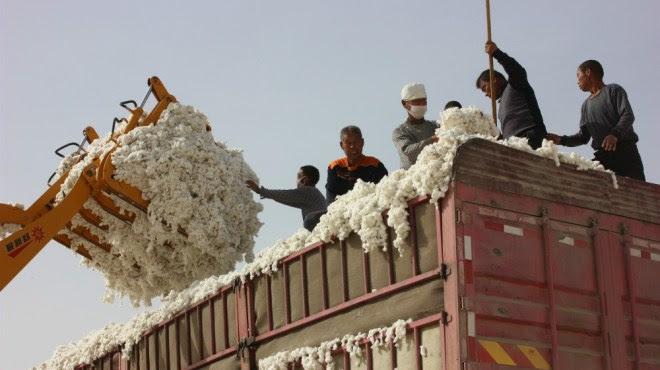 Textile Exchange, algodón orgánico