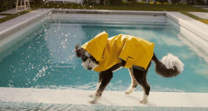 Zara Pet Collection, Zara, Pet Collection, ropa de perro, zara ropa de perro, ropa de mascotas zara