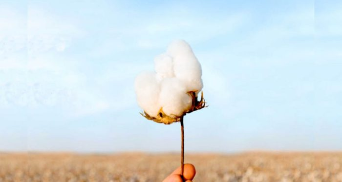 Día Mundial del Agua, U.S. Cotton Trust Protocol,  Cotton Council Internacional