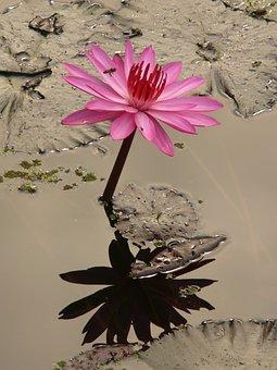 flower growing in mud