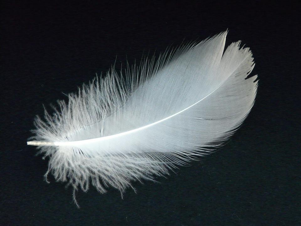白鳥の羽, 春, 白鳥, わずかに, 風通しの良い, 飛行, フィリグリー, 白, 軽量, ダウン, ふわふわ