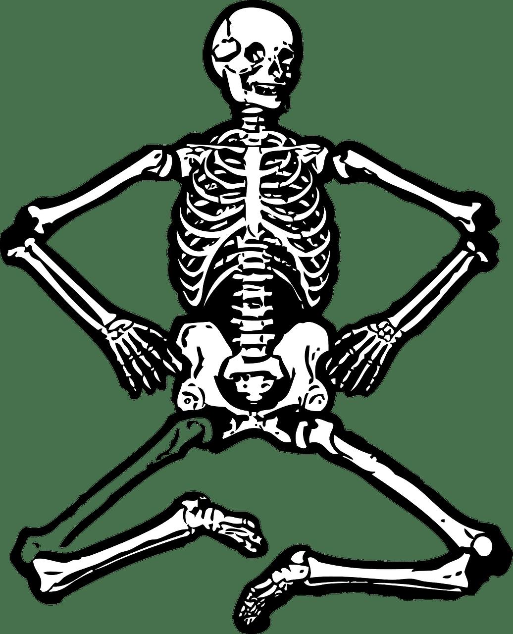 Skeleton Human Bones Free Vector Graphic On Pixabay