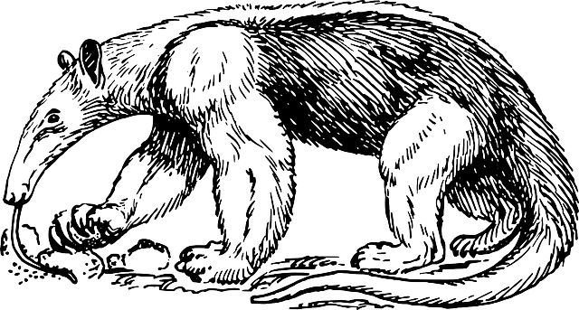 Anteater Ant Eater Free Vector Graphic On Pixabay