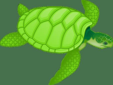 動物, カメ, 野生動物, 緑のウミガメ, アオウミガメ