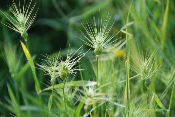 Grass, Weeds, Background, Spring, Plant, Natural