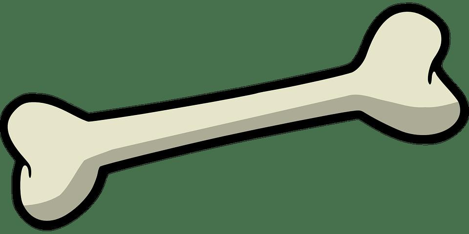 Background Transparent Bone Cartoon