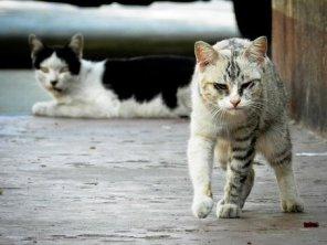 野良猫, 猫, ネコ, ホームレス, 毛皮, 子猫, ストライプ, 動物