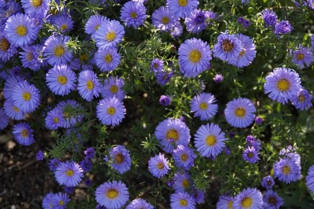 「青い花の写真 無料」の画像検索結果