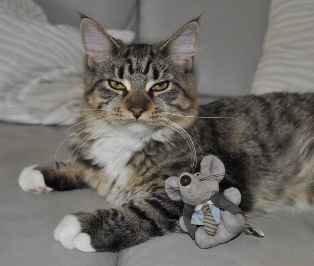 Cat Toys Mouse Break Rest