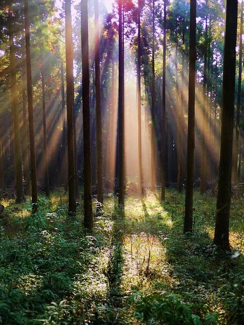 Free Photo Forest Arboretum Mountain Woods Free Image On Pixabay 220719