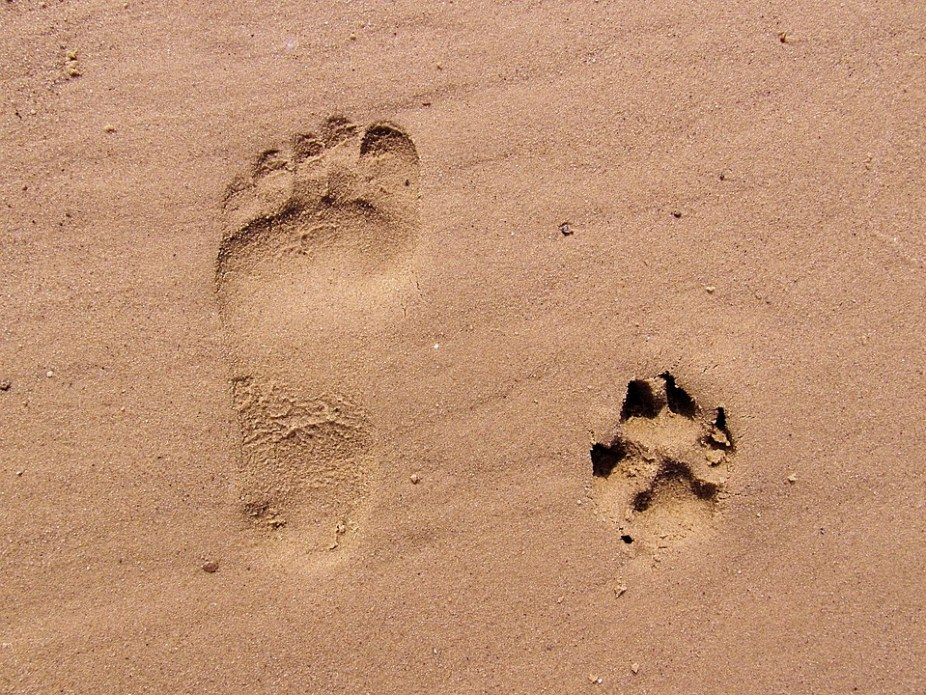 タップル 足跡
