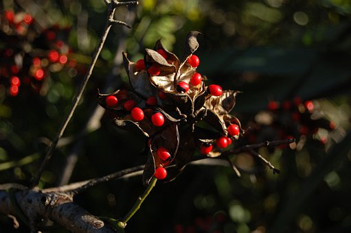Beads, Red, Black, Seeds