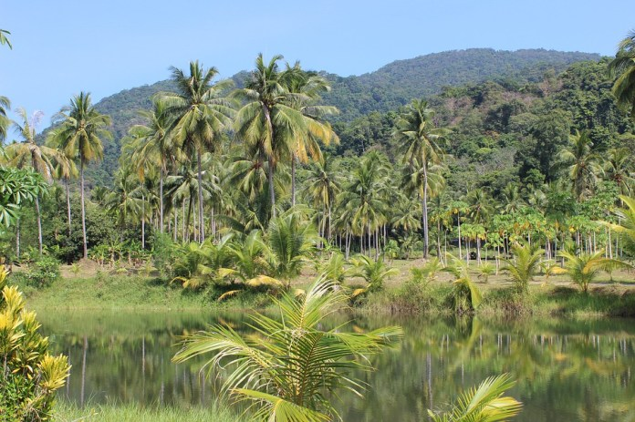 Selva, Palmeras, Río, Tailandia, Palm, Tropicales