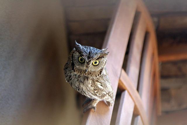 Owls Baby Birds Free Photo On Pixabay