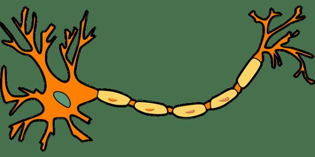Neuron, Nerve Cell, Axon, Dendrite, Cell