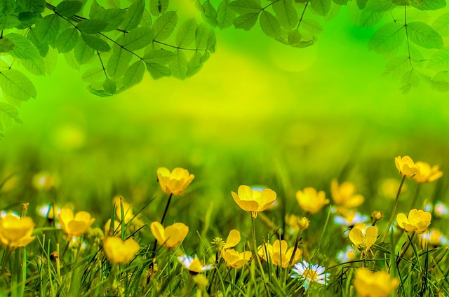 Spring Background Flower Free Photo On Pixabay